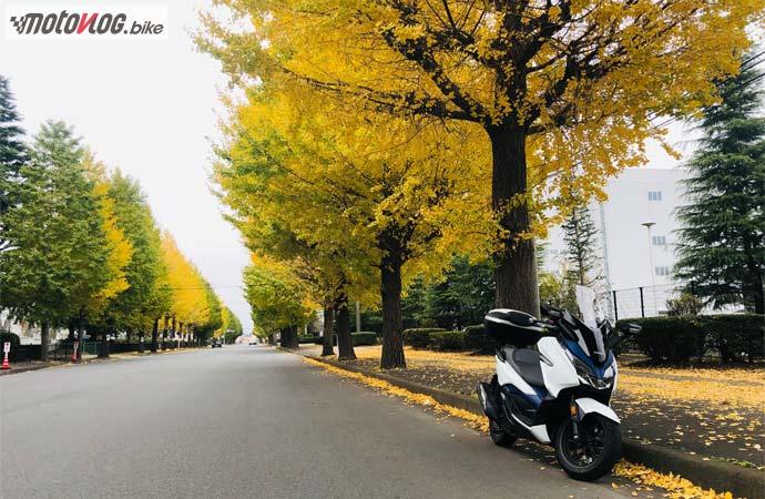 神奈川県内陸工業団地の銀杏並木